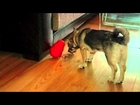 A video by BOS Photography for Nature & Nurture Pet Store