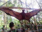 Captured a Giant Bat in Peru.Monstrous monster Bats Chiroptera WWW.GOODNEWS.WS