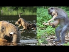 5 Amazing Animals Rescuing Other Animals 2016  - Animal Heroes